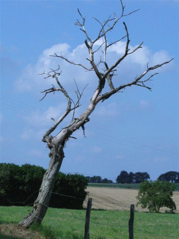 si le ps est devenu un arbre sec c 39 est que le ps est mort mickady27 sur 15 04. Black Bedroom Furniture Sets. Home Design Ideas